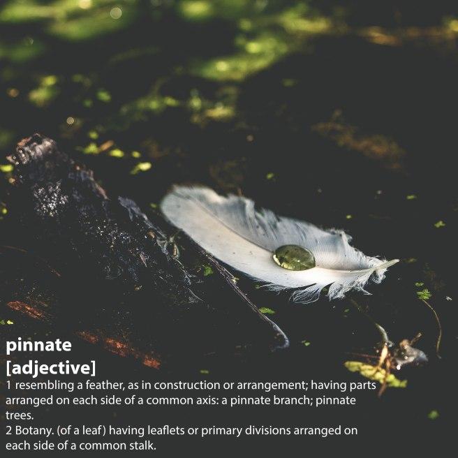 feather_pinnate.jpg