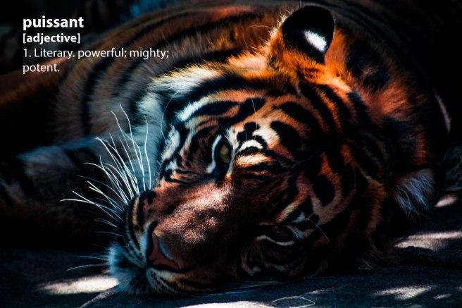 tiger1_puissant.jpg