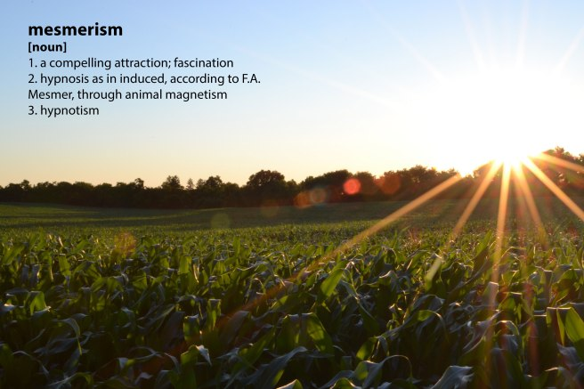 crops_mesmerism.jpg
