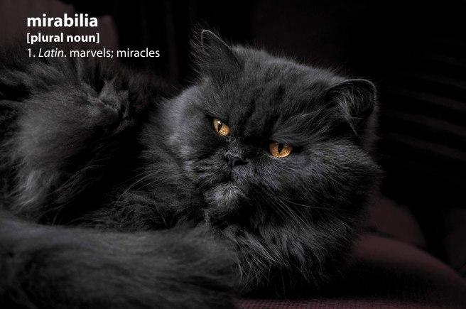 blackcat_mirabilia