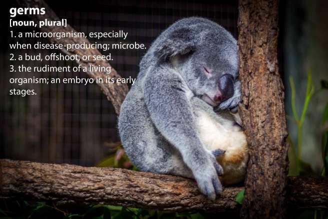 koala_germs.jpg