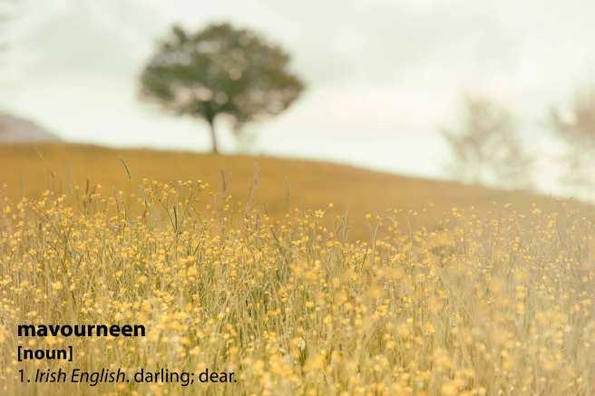 meadow_mavourneen.jpg