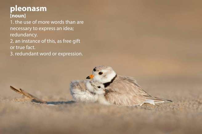 birds_pleonasm.jpg